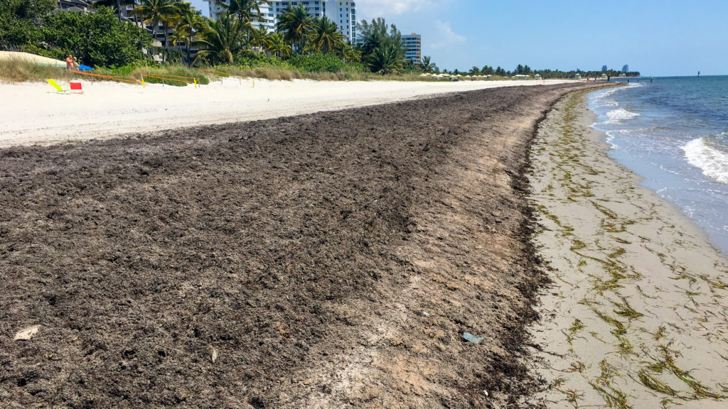 Sargassum Showdown: Residents, Experts and Village At Odds Over